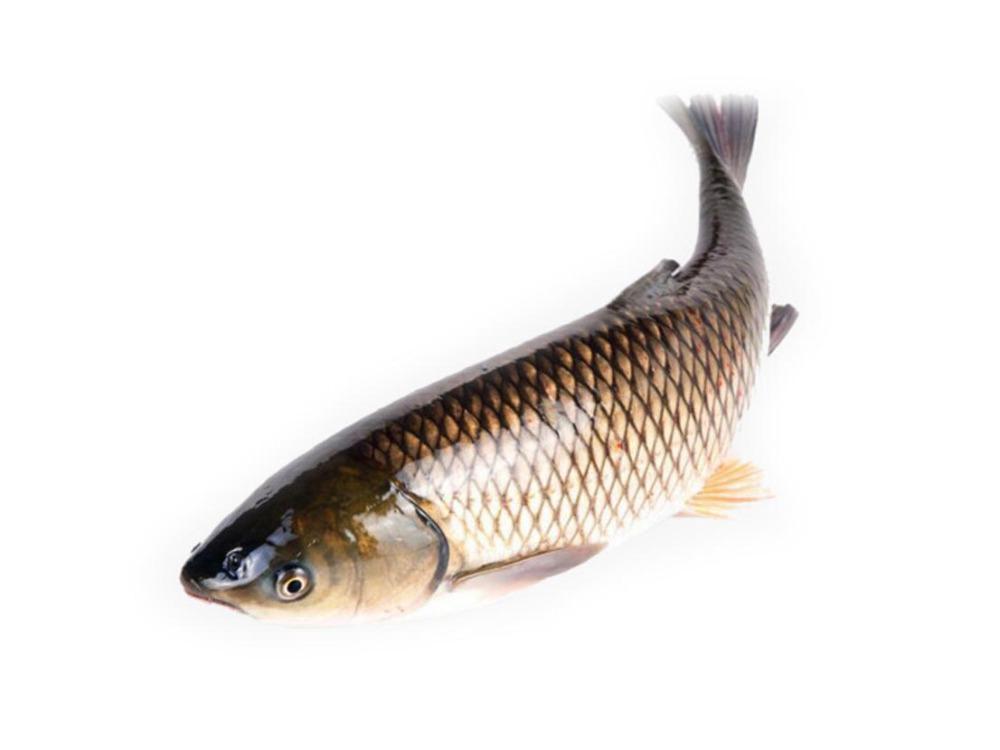 Cá Trắm Cỏ Sông Đà Làm Sạch Từ 3kg - 5kg