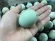 Trứng gà vỏ xanh